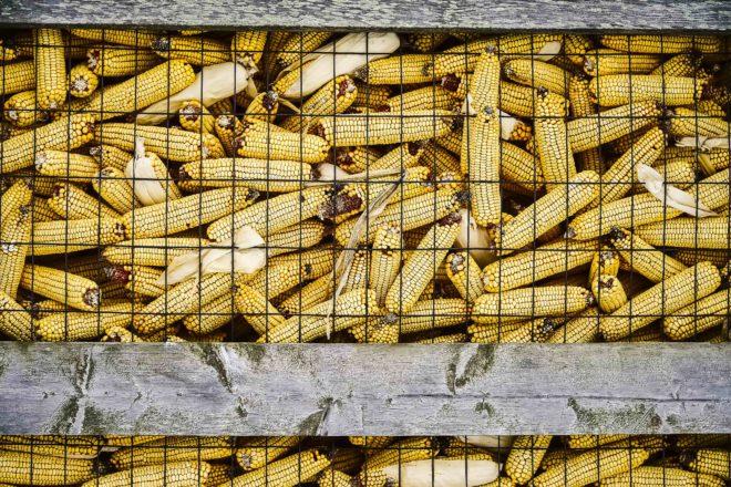 Farming the Peninsula: Commodity Price Depression Stressing Farm Sector
