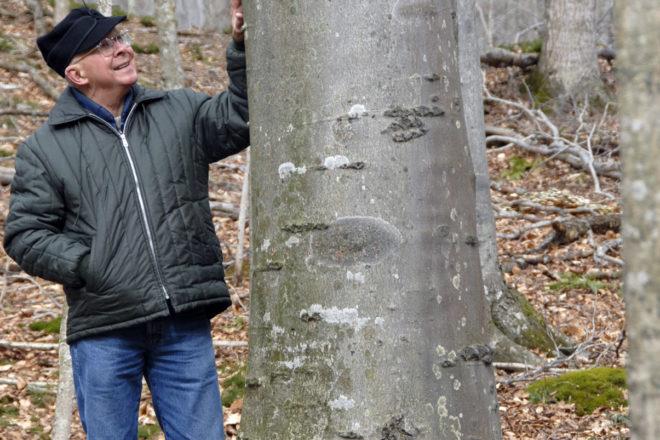 Door to Nature: American Beech Trees