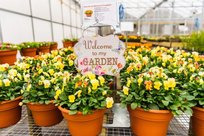 In Bloom: Sully's Produce Boasts Bountiful Greenhouse