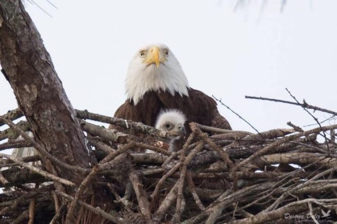 Washington Island Birding Festival Returns