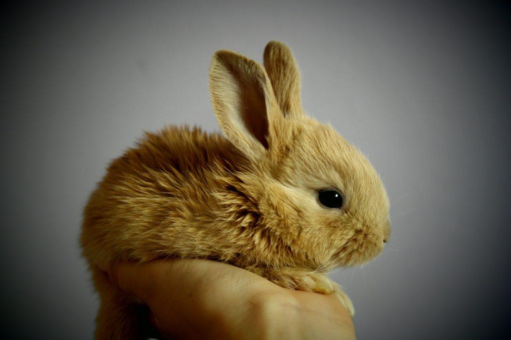 Сонник странника вот что говорит данный сонник: если вы видите во сне дерущихся кролей, возможно, скоро за вас также будут драться два ваших поклонника.