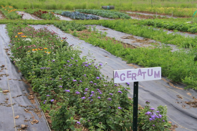 Robbens Nest Farm: Growing Local Food, Flowers & Community
