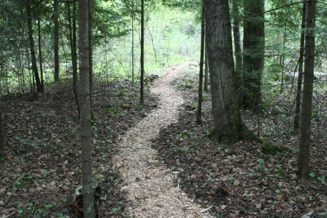 Interpretive Hikes at The Clearing