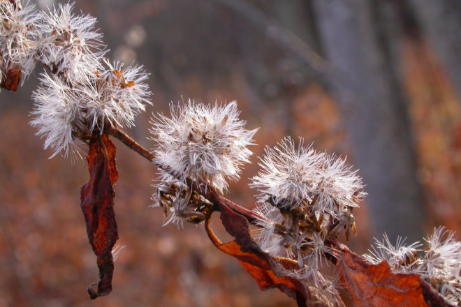 Door to Nature: Seeds Blow in the Autumn Wind