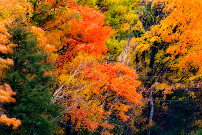 News Bulletin: Door County's Fall Foliage Up to a Vote