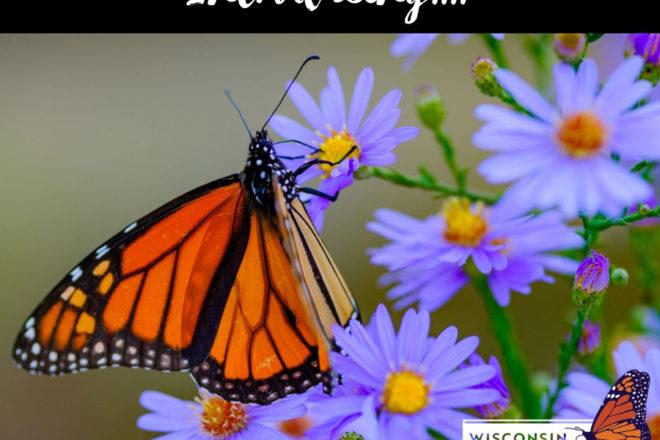 Time to Plan Monarch Habitats