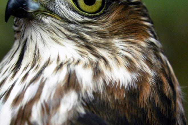 Door to Nature: Predators of Feeder Birds