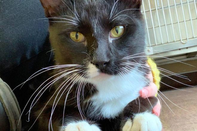 DCHS Featured Pet: Canasta