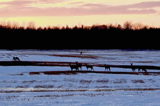 Deer Councils' First Shots at 2019 Hunt Plans