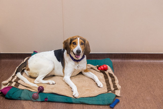 To the Rescue! Wisconsin Humane Society Door County Campus Welcomes 25 Dogs