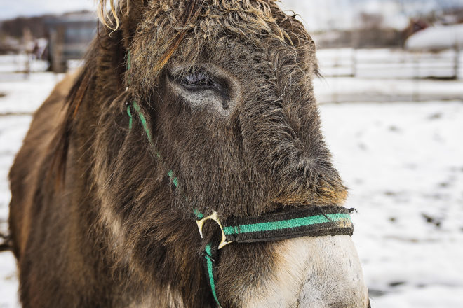 Len's Pic of the Week: Jake the Donkey