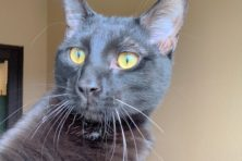 Door County Humane Society Featured Pet