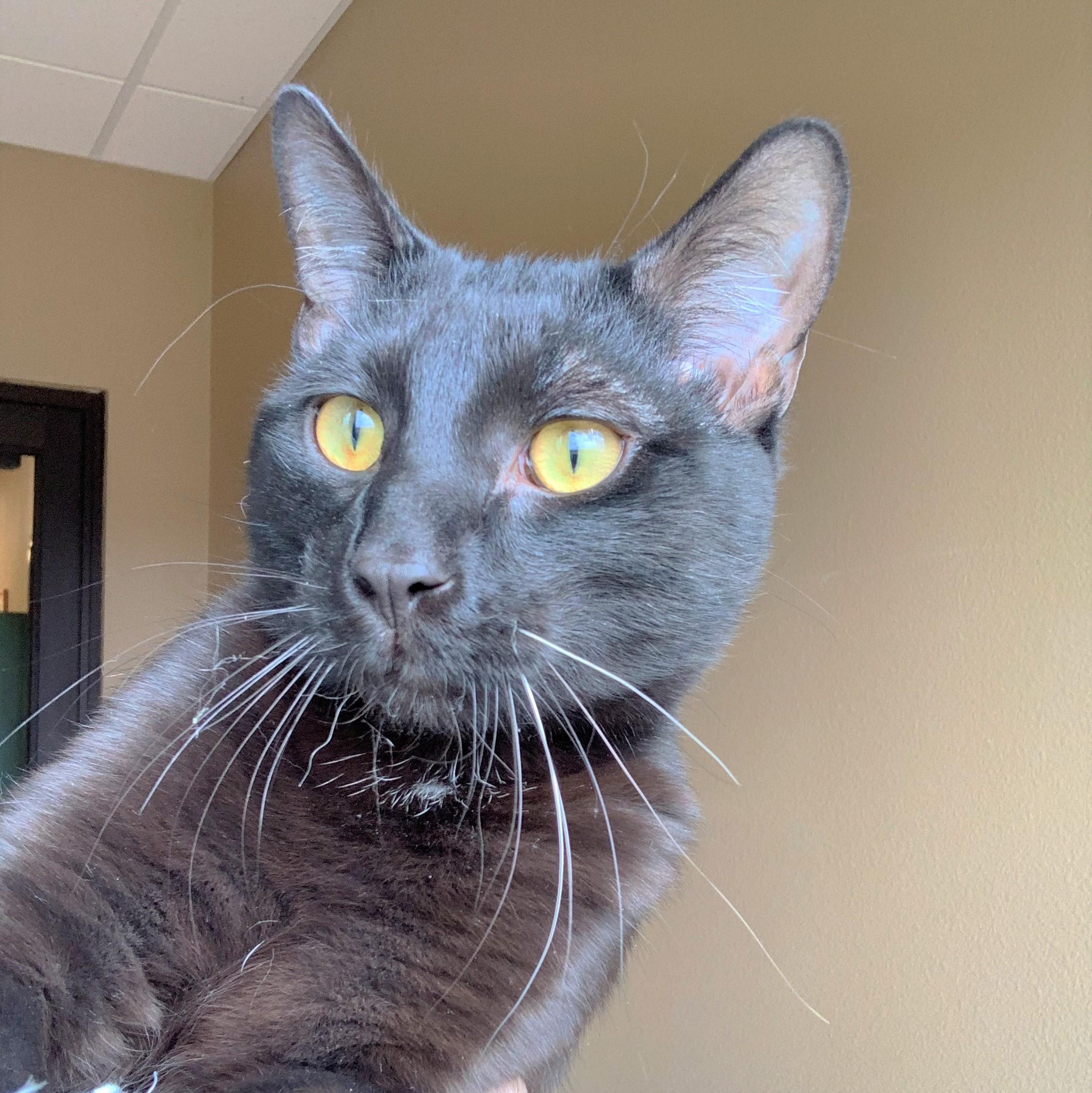 Door County Humane Society Featured Pet