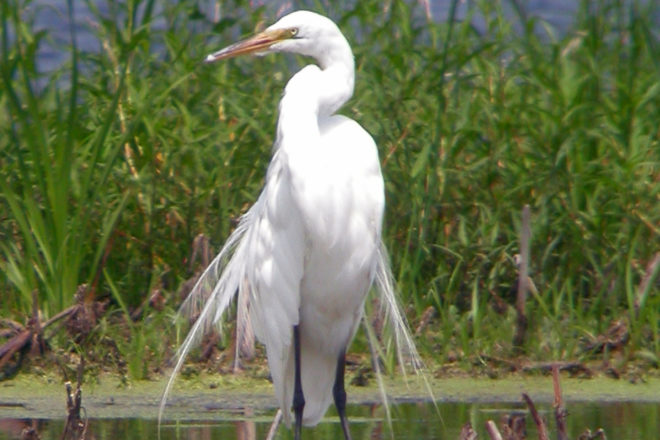 Door to Nature: Egrets and Herons