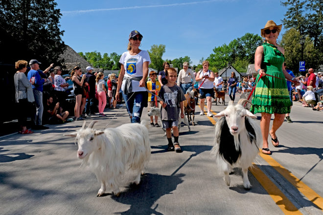 New Events Coming to Goat Fest Saturday