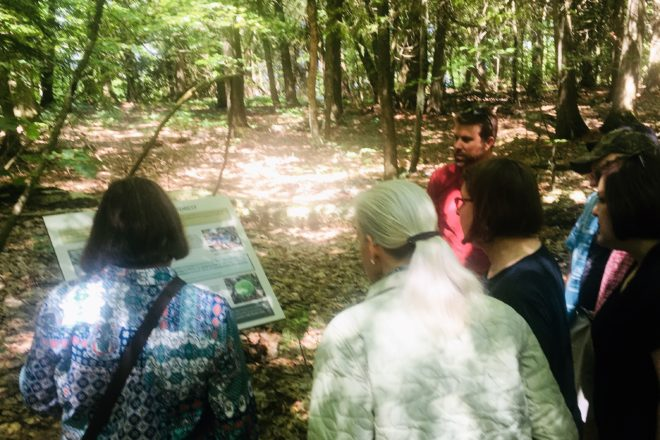 New Interpretive Trail Signage at Ellison Bluff County Park