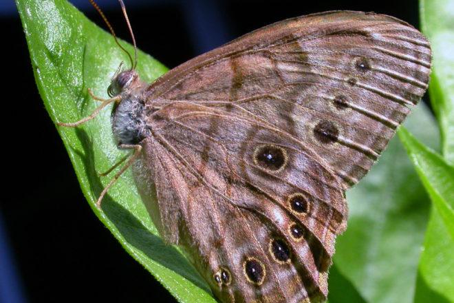 Door to Nature: Gentle, Voiceless Creatures