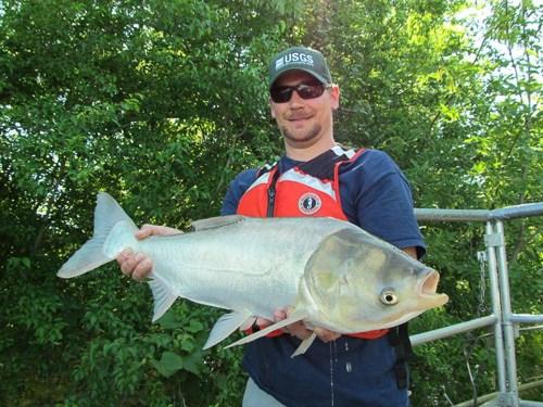 Lake Michigan's 'Plankton Desert' No Problem for Bighead Carp