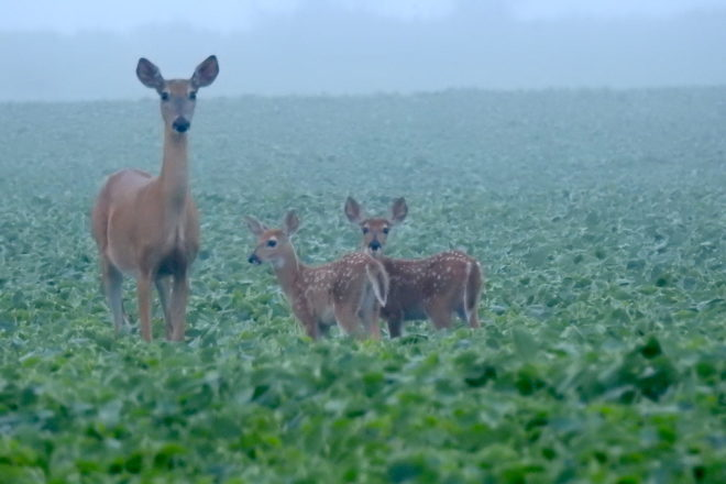 Archers, Crossbow Hunters Preparing for Deer Season - Door