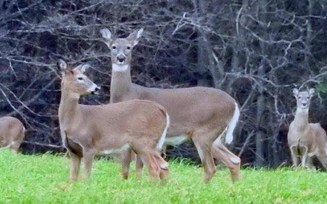 Late Gun Deer Opener a Mixed Bag for Hunters