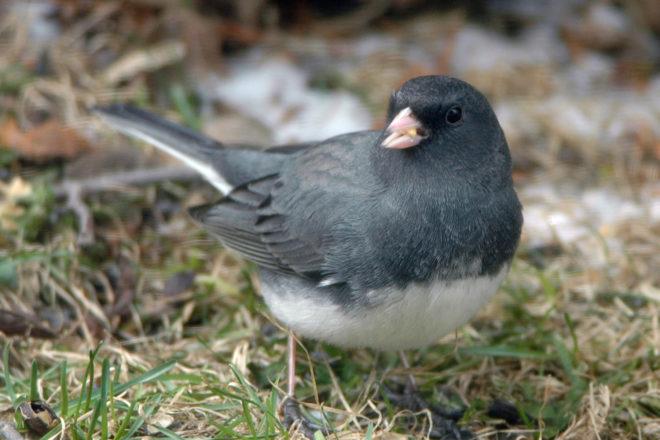 Door to Nature: Upcoming Christmas Bird Counts