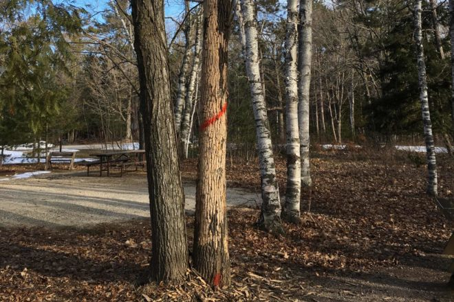 Infected Trees at Potawatomi to Be Removed