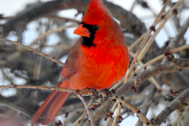 Birds of a Feather Can Help Scientists in Count Feb. 14-17