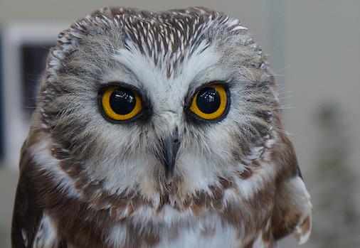 Join The Ridges for Owl-O-Rama Feb. 28-29