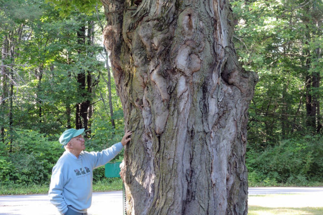Door to Nature: The Sugar Maple, Our State Tree