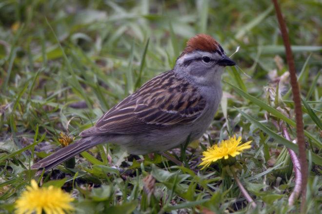 Door to Nature: Birds That Are Seedeaters
