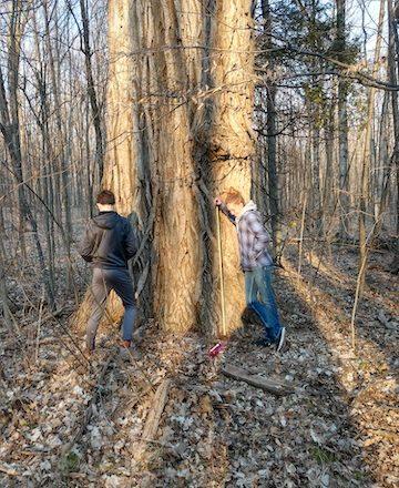 Framed: Urbans Measure Old Tree