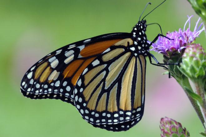 Door to Nature: A Season of Butterflies