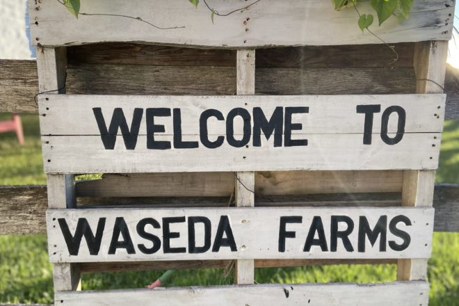 Know Your Grower: Waseda Farms Garden