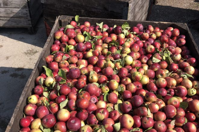 Know Your Grower: Hyline Orchard Farm Market