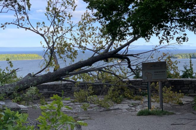 Framed: Tree Down at Peninsula State Park