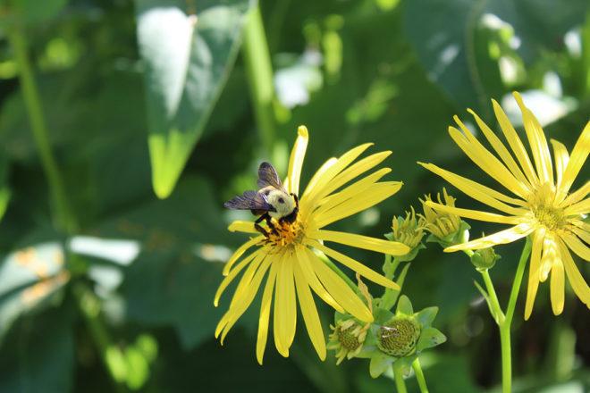 Server of the Week: A Humble Bumblebee