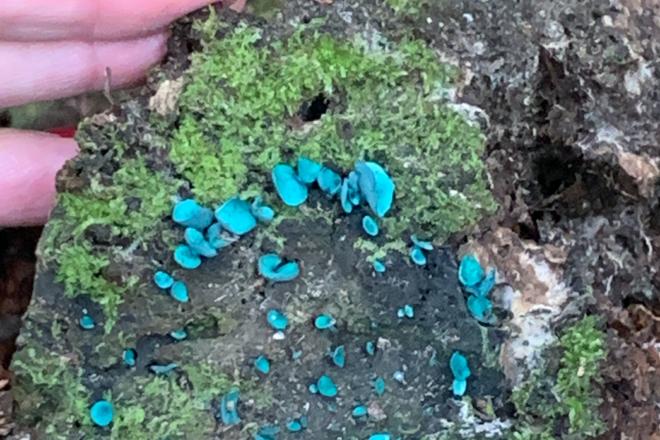Door to Nature: Tiny, Colorful Fungi