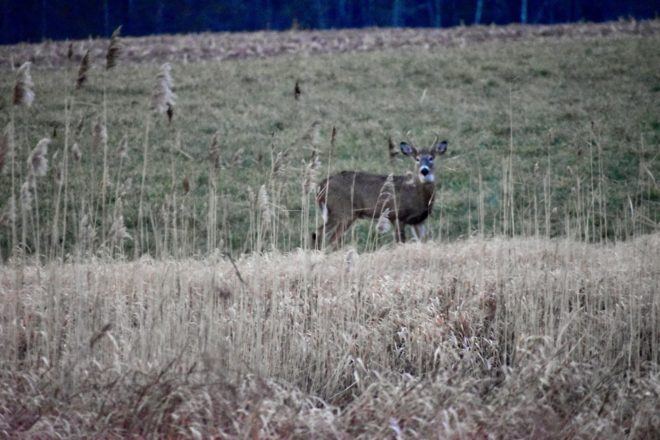 Wild Things: Nearly Perfect Opening-Weekend Weather a Boost to Deer Hunt