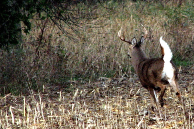 Wild Things: Hunters Hope Rain Holds Off for Annual Gun Deer Opener
