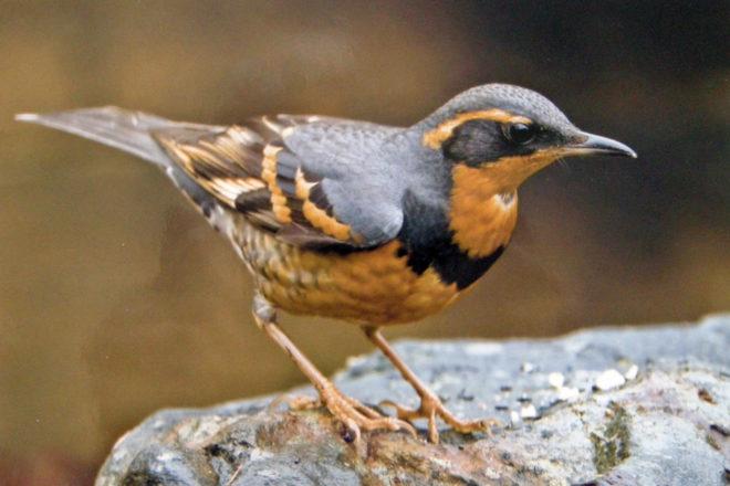 Door to Nature: Rare Winter Bird Visitors