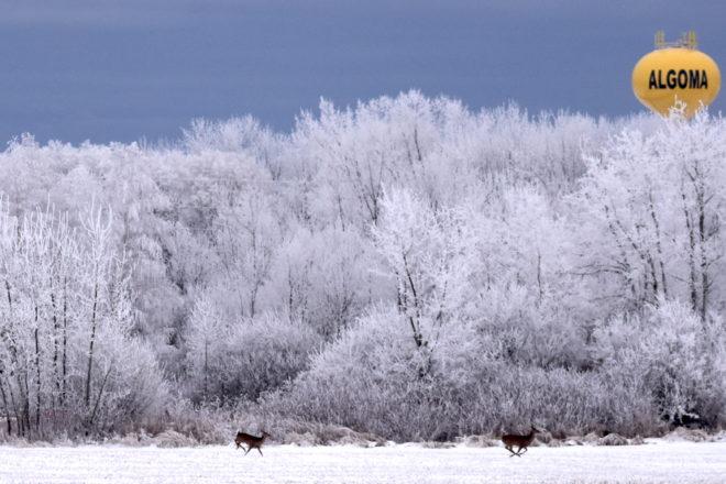 Wild Things: Time to Split Door for Deer?