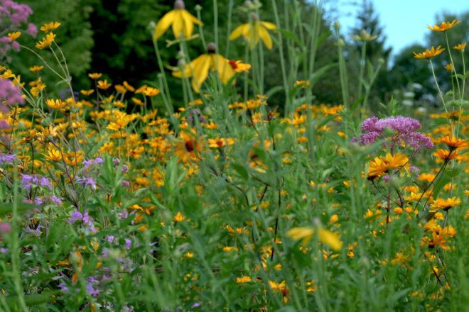Wild Ones: Native Plants Attract Pollinators