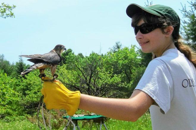 Open Door Bird Sanctuary Introduces Raptor Rambles