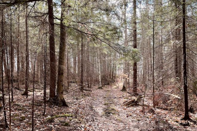 Hike This: A Feeling of Nostalgia on the Sugarbush Trail