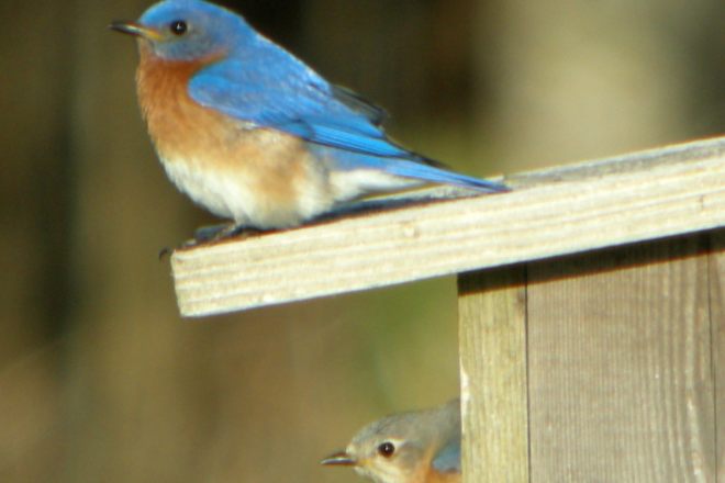 Door to Nature: Migrating Birds and Climate Change