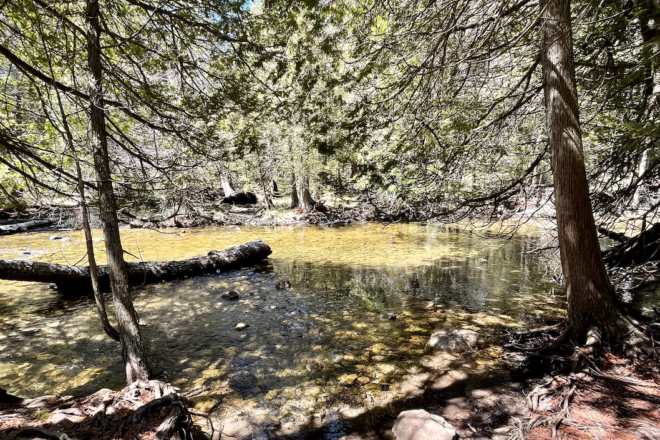 Hike This: The Whitefish Creek Spur Trail