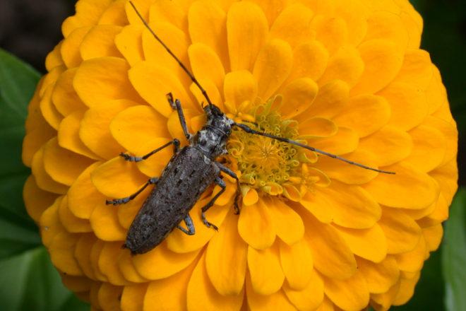 Door to Nature: Bugs and Beetles