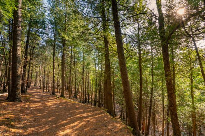 Hike the Hemlock Trail