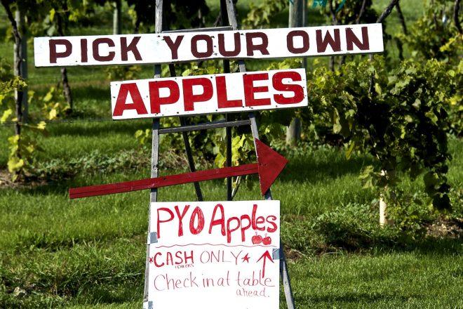 Apple Picking Season Is Here