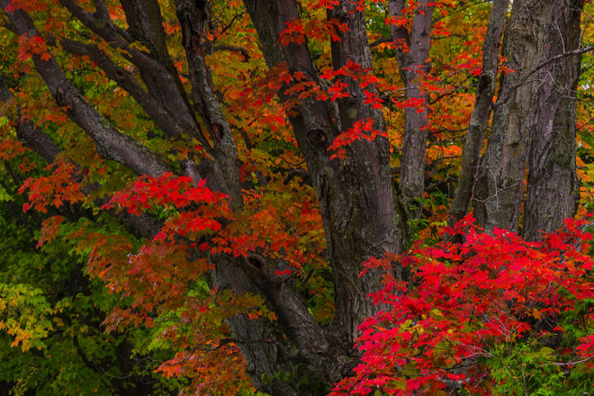 Leaf Peepers, Rejoice! What science tells us about fall colors